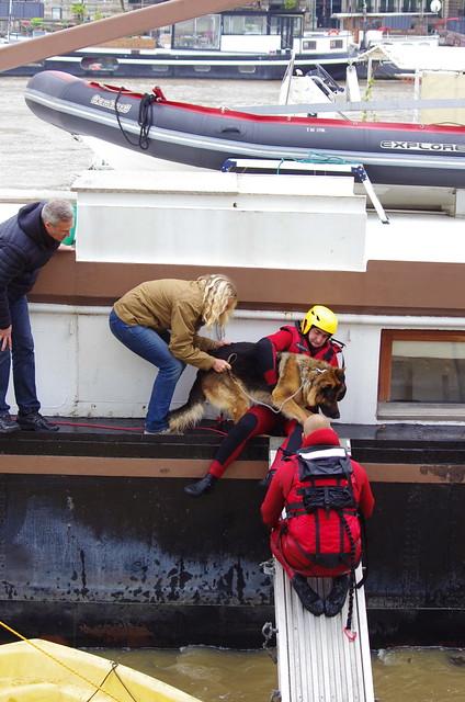 Paris Juin 2016 - 70 Quai des Tuileries, près de la Passerelle Solférino, sauver le chien malgré lui
