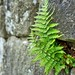 Small photo of All in all, you're just another fern in the Wall