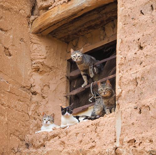 Cats lurking - Gatos al acecho en la ventana