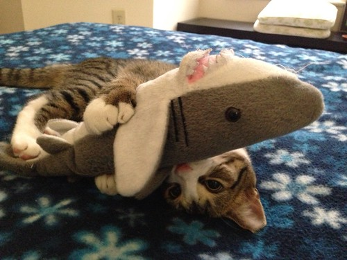 Amelia is fighting with the plush shark again