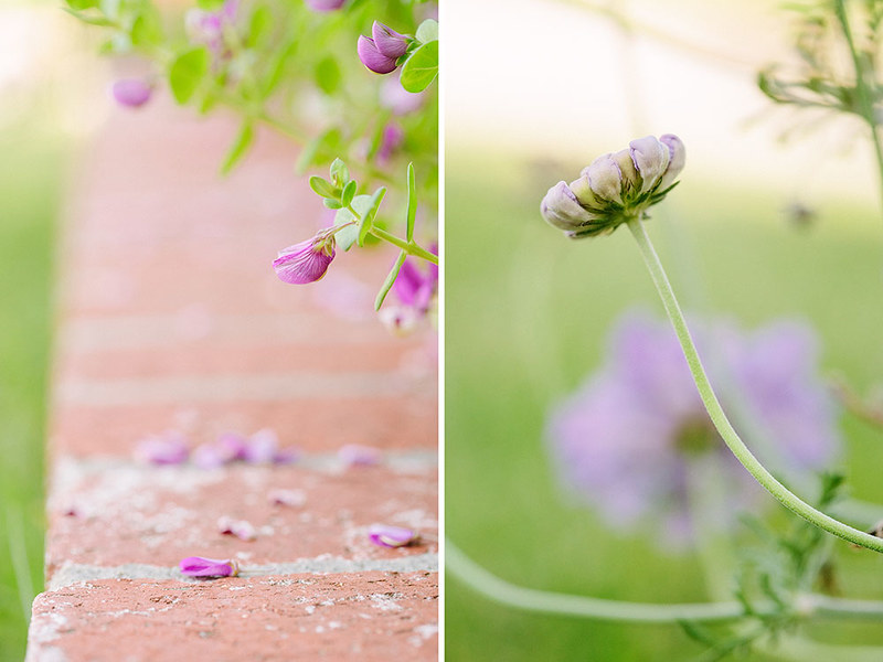 flowers_5.13_diptych