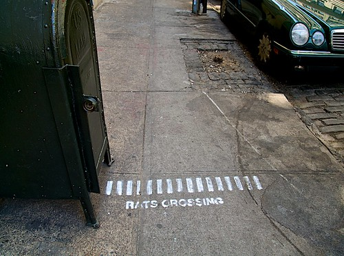 DUMBO-RATS CROSSING
