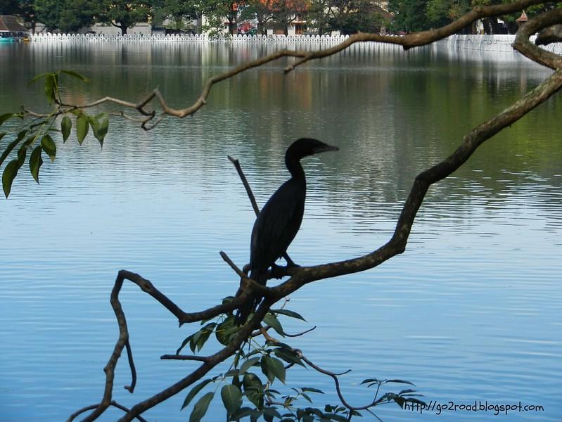 Озеро Канди - его урашение