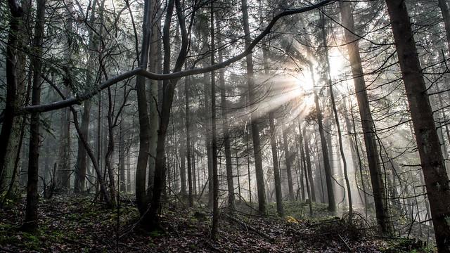 Des Bois , de la brume