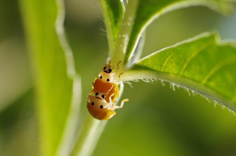 瓢蟲很忙!!