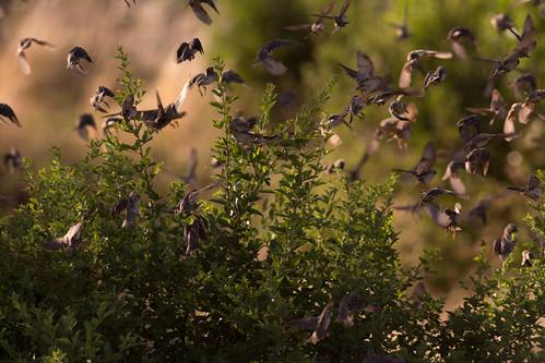 park lake birds tanzania sand national manyara