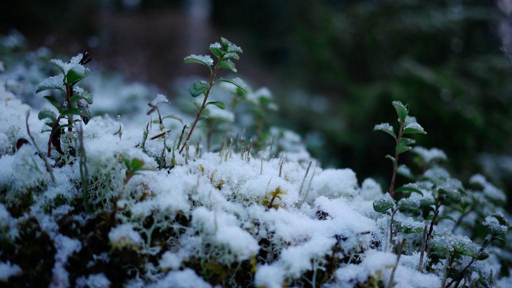 2nd Snow