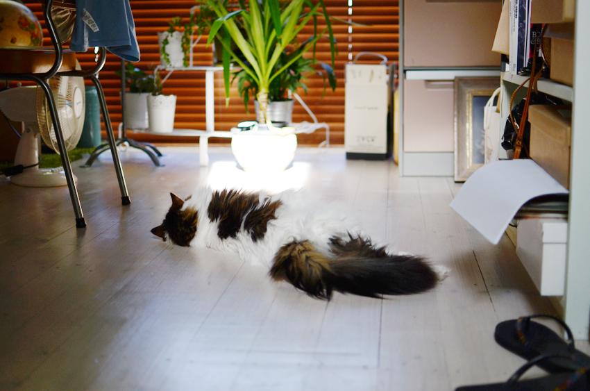 babycat-shade-plant b