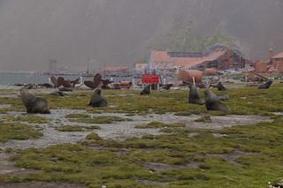 350 Zeeberen en Stromness
