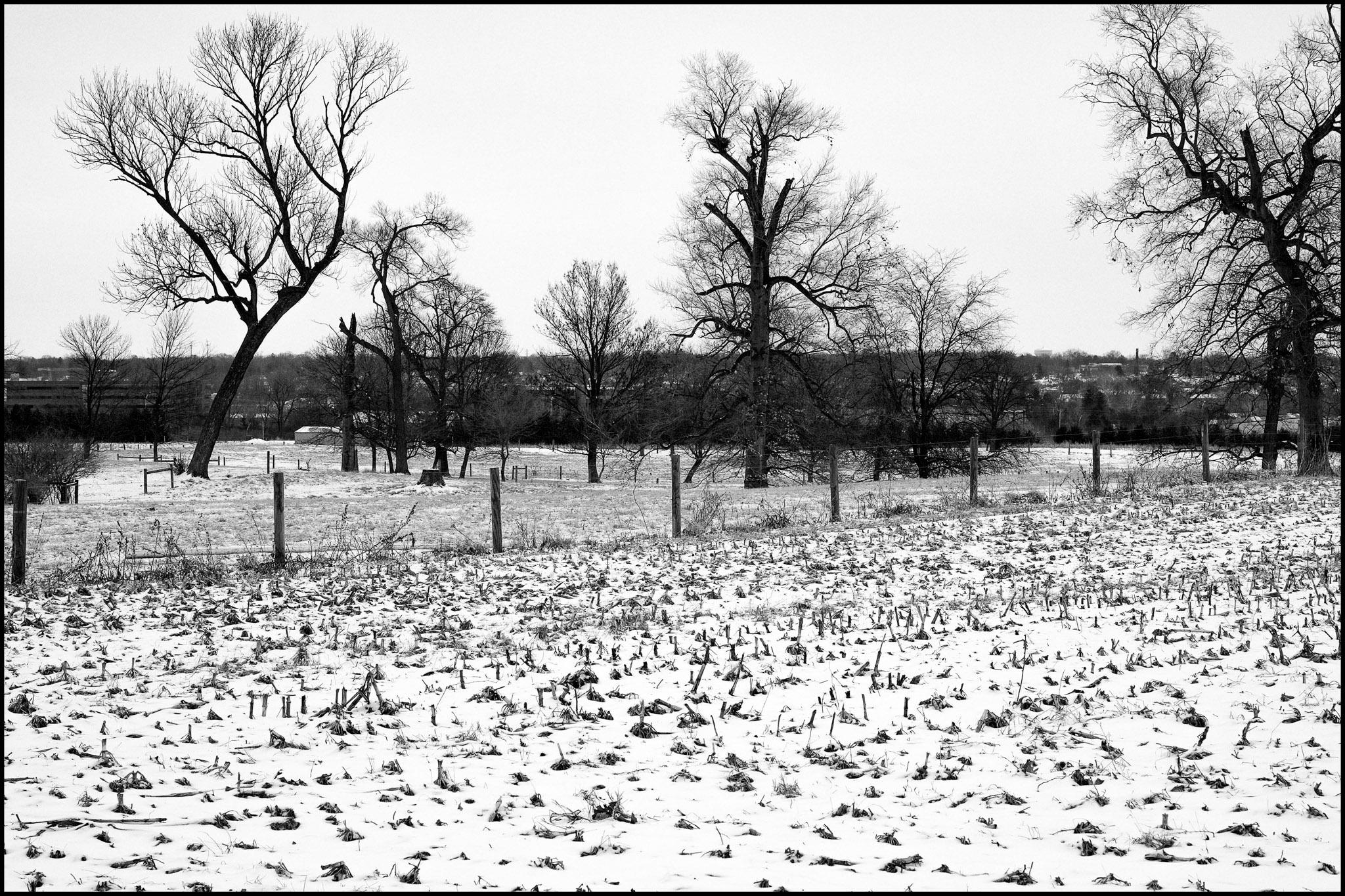 Waterman Farm in Winter #1
