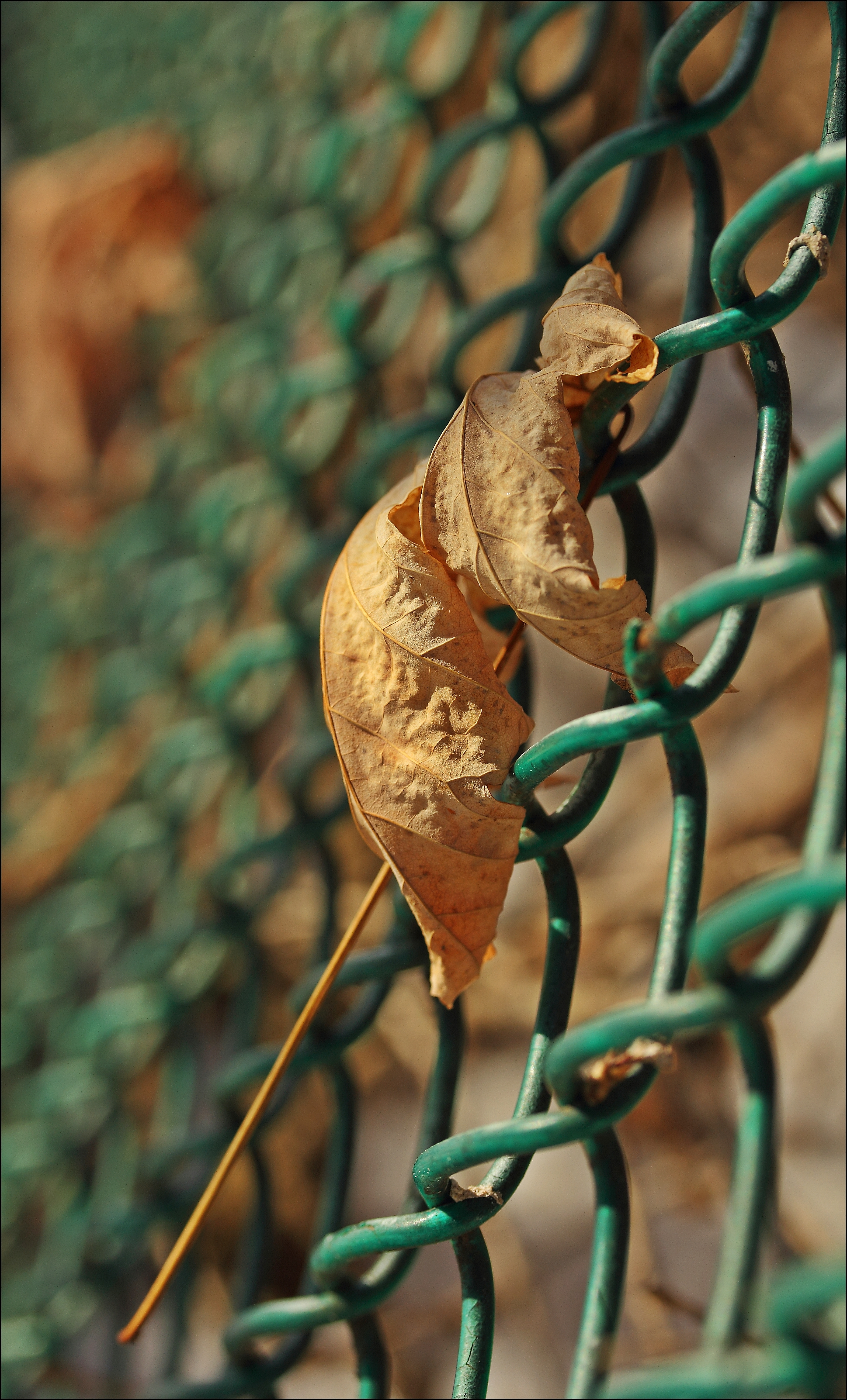 Was So Nice To Be Home Today & We Even Had Sun. plants, sun, leaves, canon, fence, dead, 28, 60mm, 60d. buy photo