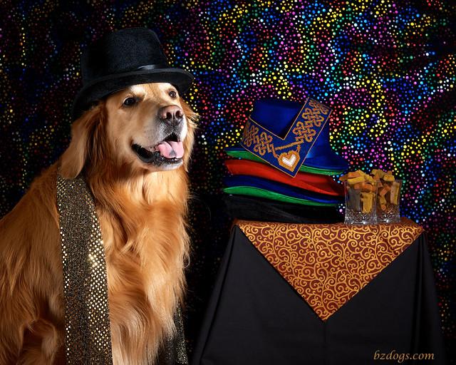 Canine Modeling Lifestyle