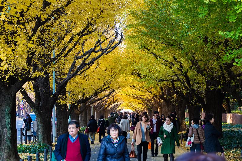 ginkgo avenue (aka icho namiki) - 9