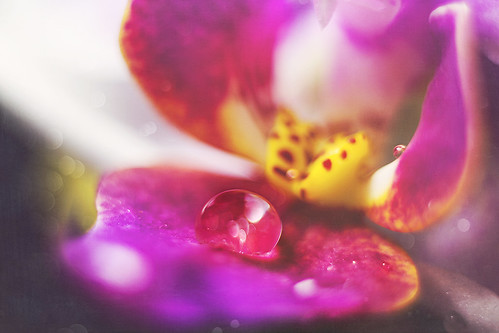 orchid and bokeh