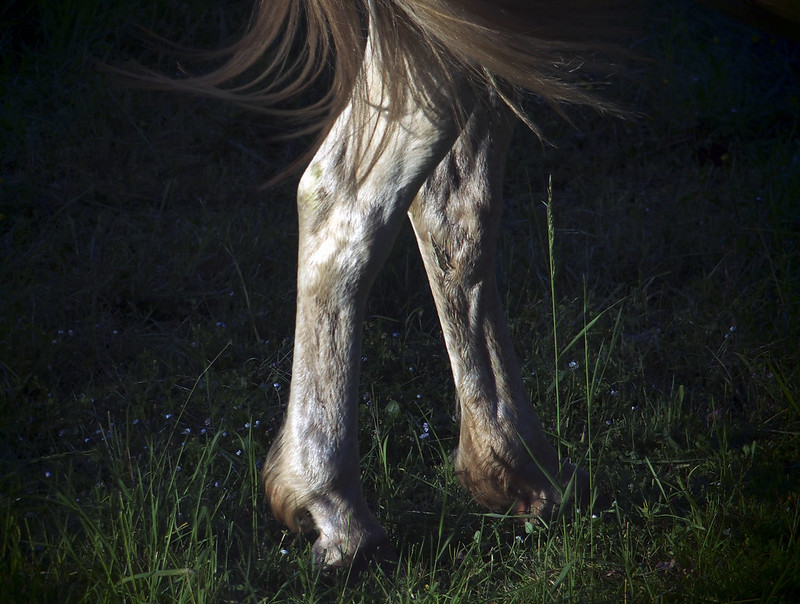 Horse (3/4)