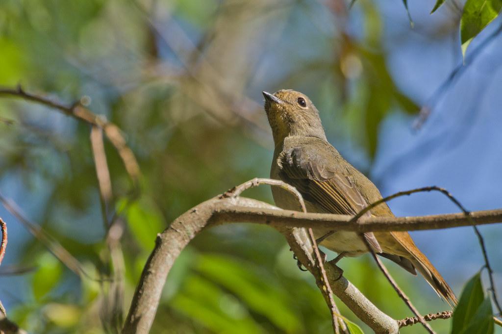 布洛灣鳥類簡單整理
