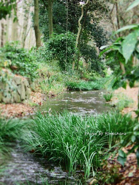 糺の森に流れる川。