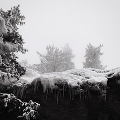 Fog in Montana IPhoneography Iphoneonly Winter OpenEdit Blackandwhite Mobilephotography Monochrome Ice Natural Beauty