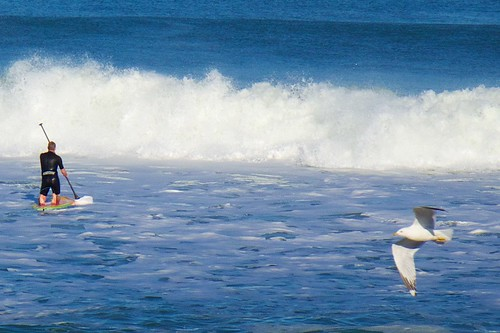 ocean beach surf surfer seagull surfboard wetsuit