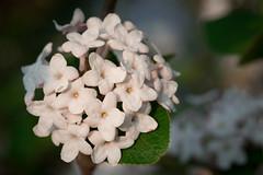 Spring Campus Flowers-23
