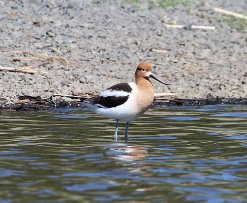 wadingbird01