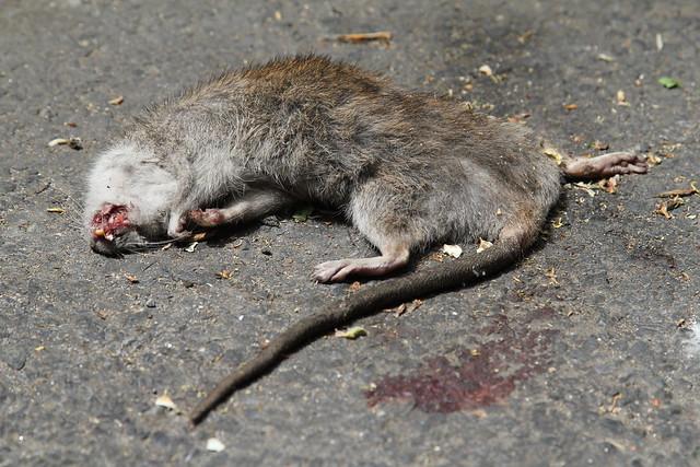 Urban Roadkill