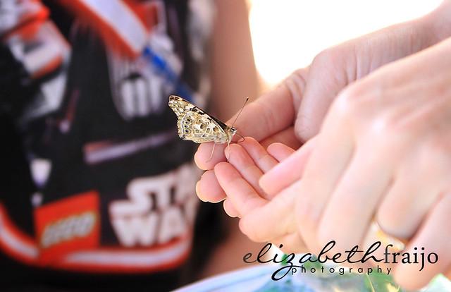 Butterflies01W