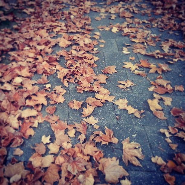 Autumn in Perth...