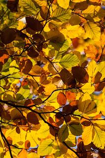 Achter de bladeren schijnt de zon