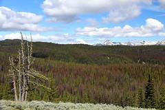Bethel Ridge, Yakima County Washington Hike