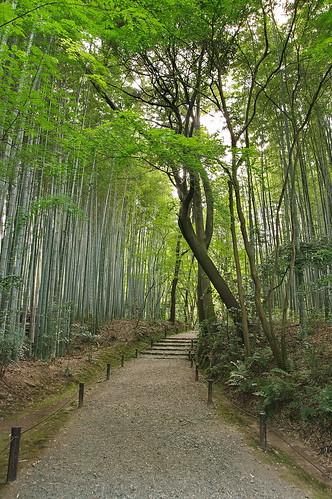 【写真】2013 青葉 : 地蔵院/2021-07-28/IMGP0961