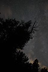 Night Sky at Adventure Park