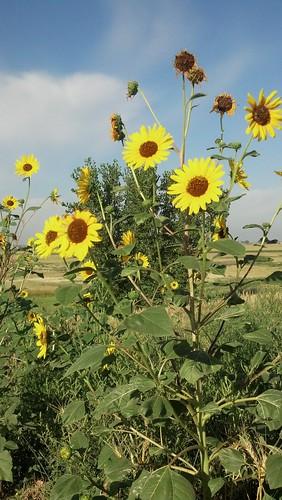 road travel flowers nature landscape colorado trail plains pawnee flickrandroidapp:filter=none