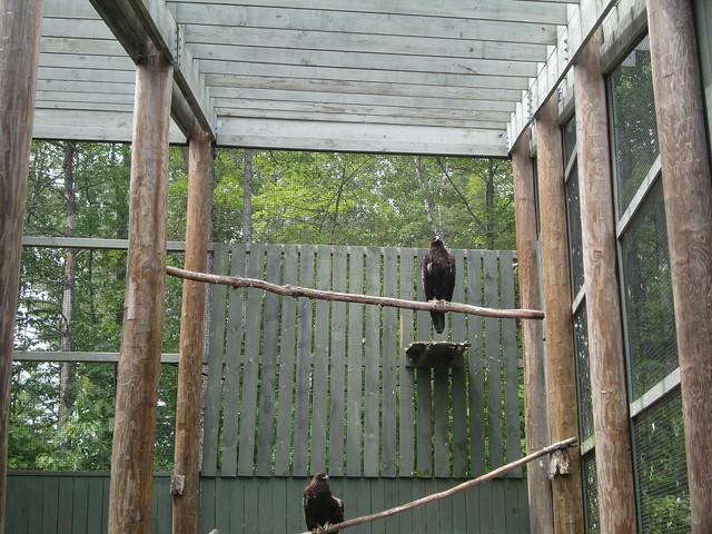 VINS eagle