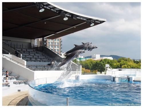 Aquarium #09