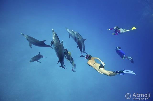 Bimini Dolphin Swim - 28/2013