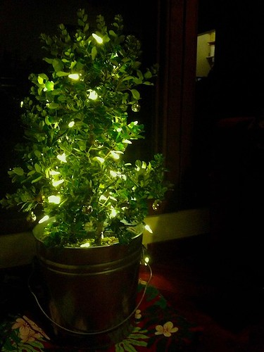 Planting Christmas