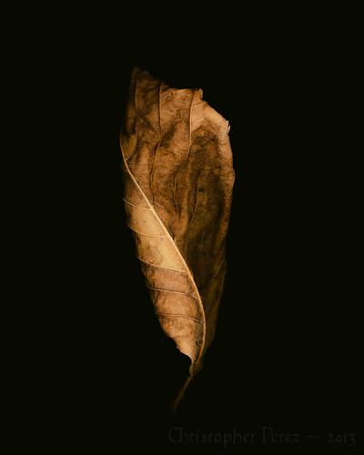 Study in Leaf