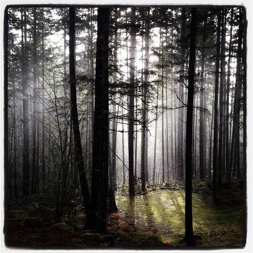 mornin' by Nature Morte