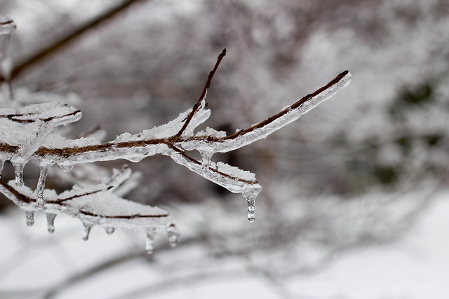 Snow Days 1