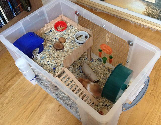 Proud of your hamsters cage page 599 supplies for Plastic bin guinea pig cage