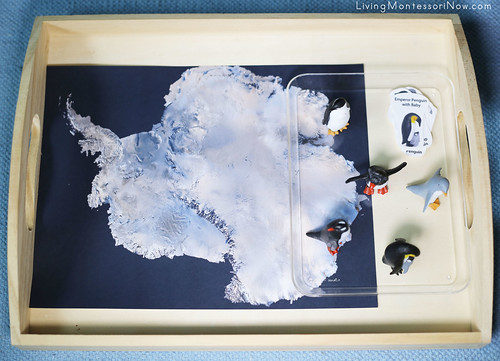 Penguins on Satellite Map of Antarctica Tray