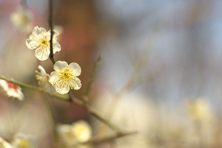 """Spring has come(taken by old Nikkor lense)"" No.1."