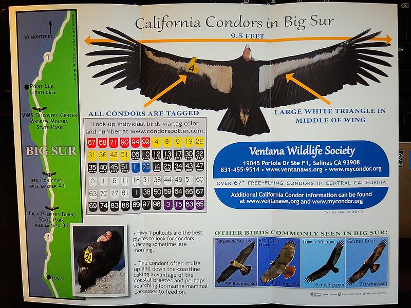 DSCN1477 Condor Tour