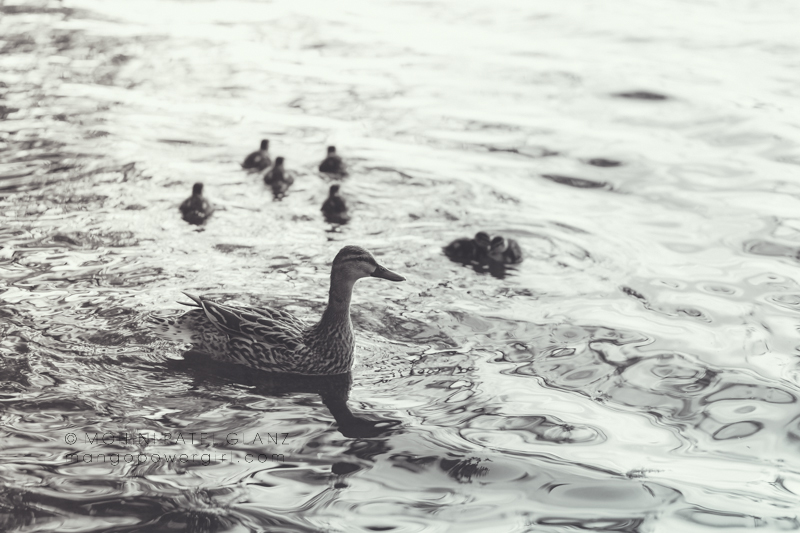 monochromatic family of ducks