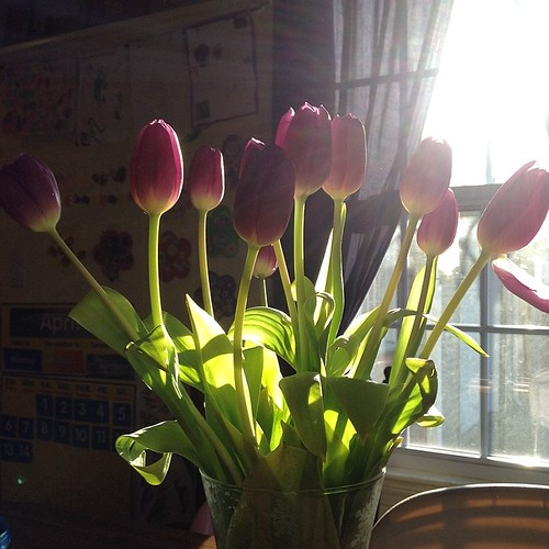 Tulips in the sunshine #followthelight