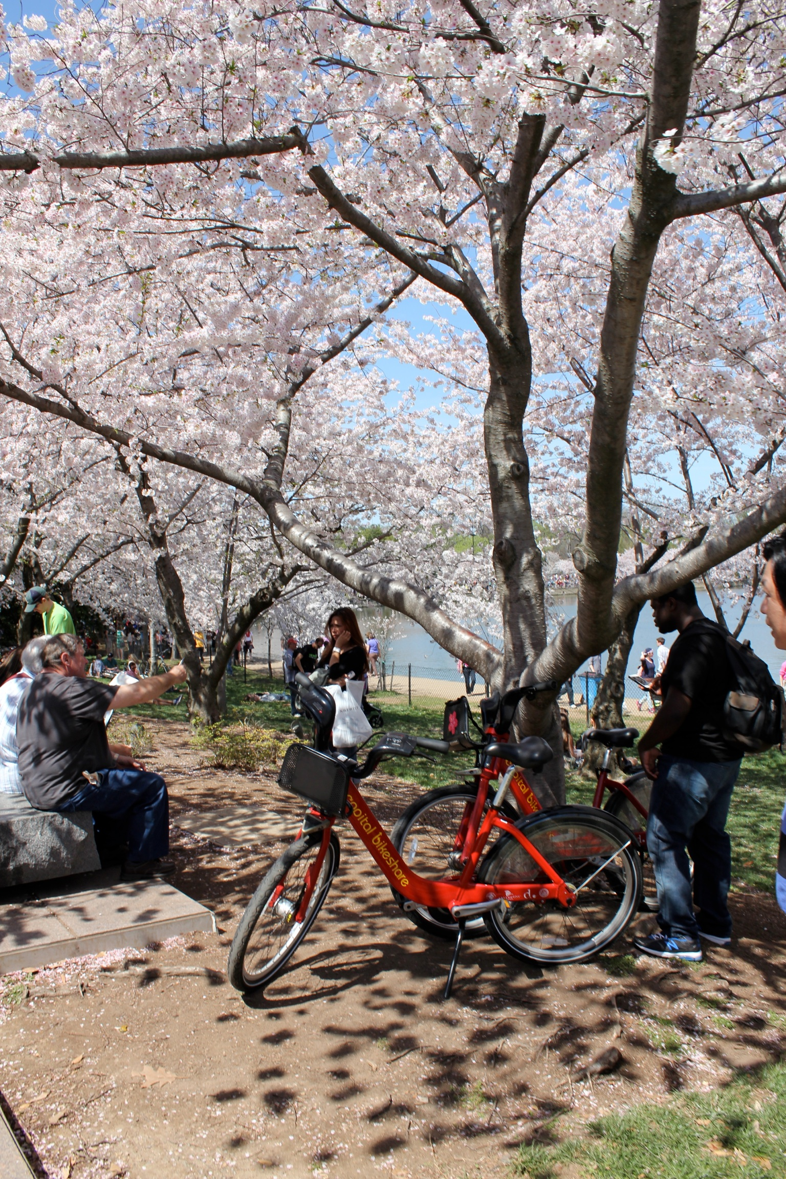 National Cherry Blossom Festival 2014