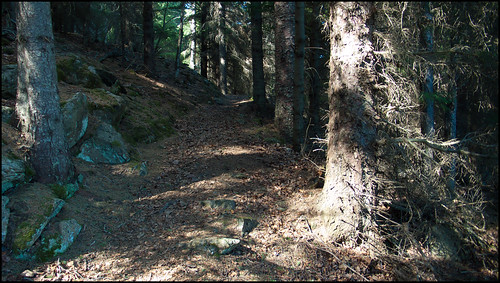 Shady part of trail
