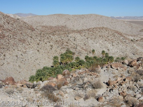 Palm Bowl, Anza-Borrego Desert State Park, California