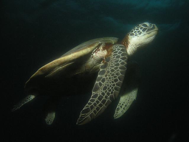 """<img src=""""padi-fun-diving-tioman-island-malaysia.jpg"""" alt=""""PADI fun diving, Tioman Island, Malaysia"""" />"""
